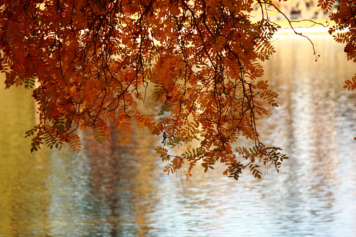 fall branches over water