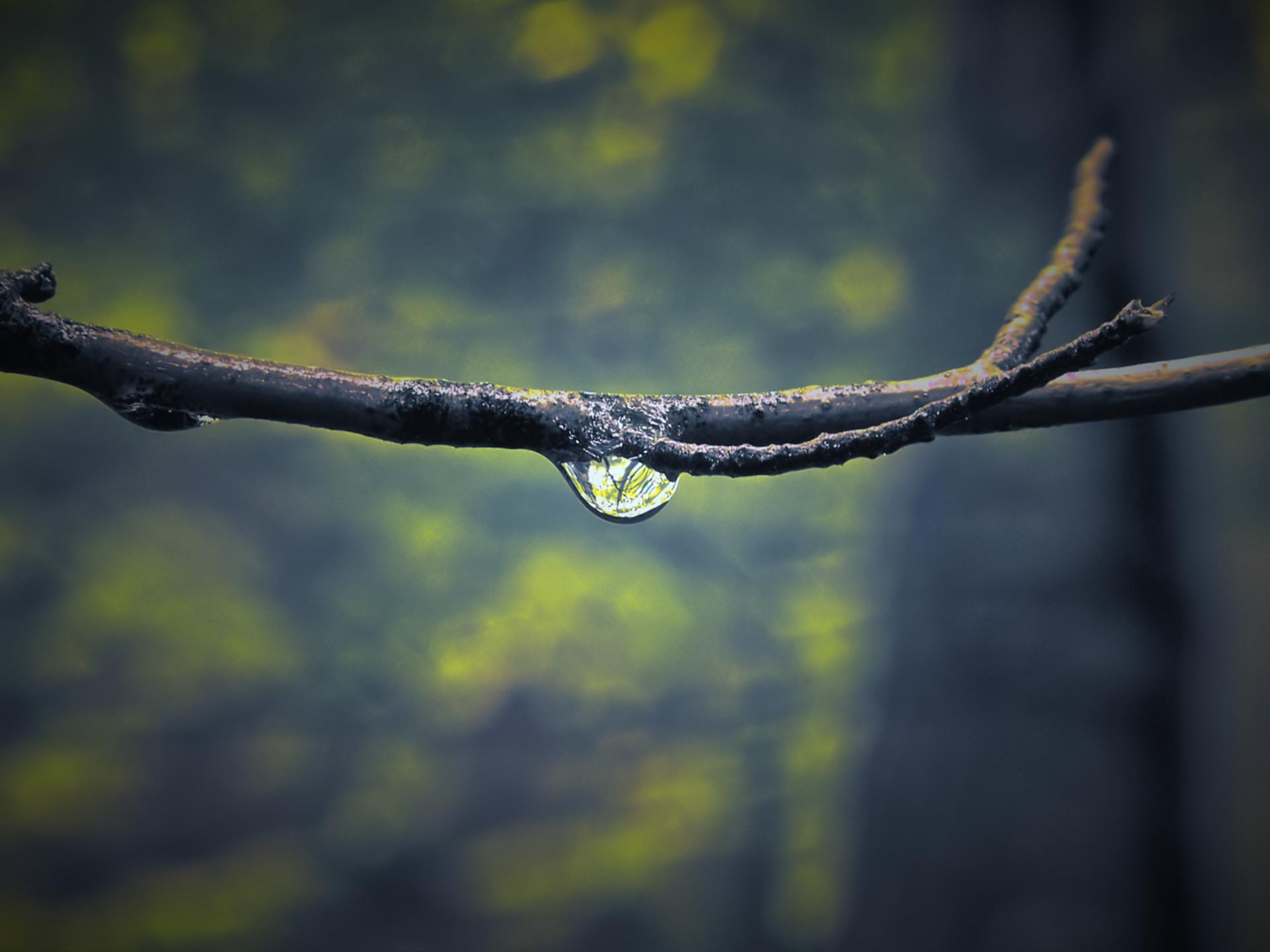 water drop on twig